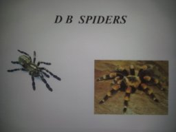 D.B. Spiders