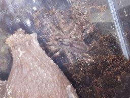 Spiderlover